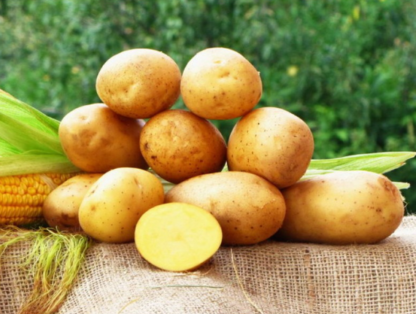 Картофель Смак