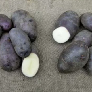 Картофель Черный Принц