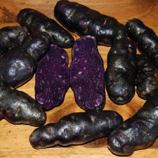 Дикий черный картофель