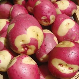 Картофель Апачи