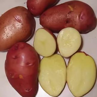 Семенной картофель Тайфун
