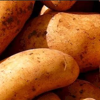 Картофель Киранда