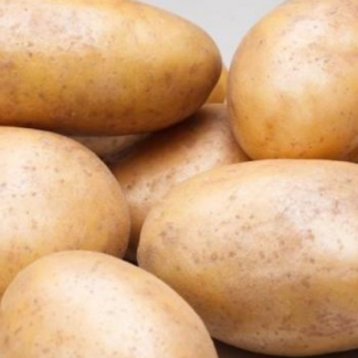 Картофель Дебют 2019 года