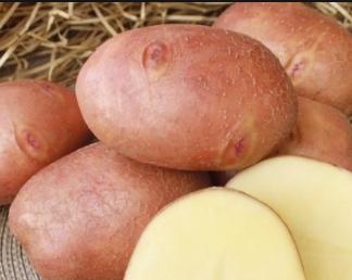 Сорт картофеля Изюминка