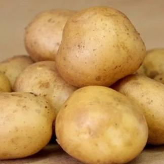 Картофель на семена Колобок