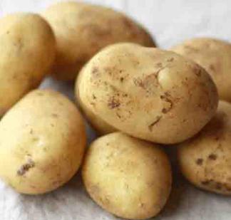 Сорт картофеля Вымпел