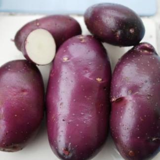 Семенной картофель Голубой Дунай
