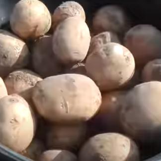 Сорт картофеля Юлия