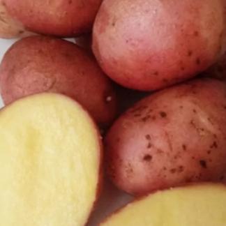 Картофель Орлак