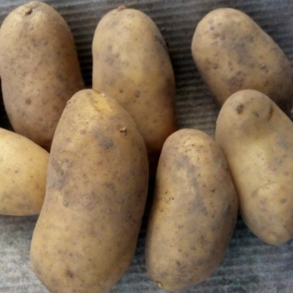 Картофель сорта Варяг