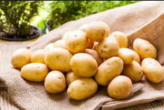 Картофель Утро